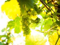 In der Weinregion um die Nahe kann man hervorragend entspannen und sich vom Alltagsstress erholen.